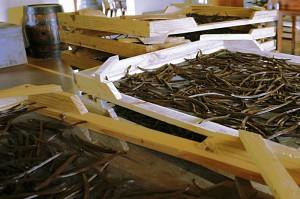 Fermented vanilla pods in ripe box
