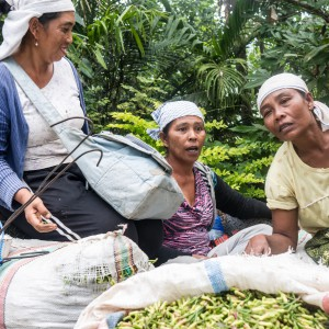 Balinese plantation workers