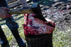 A pig's head being cut with an ax