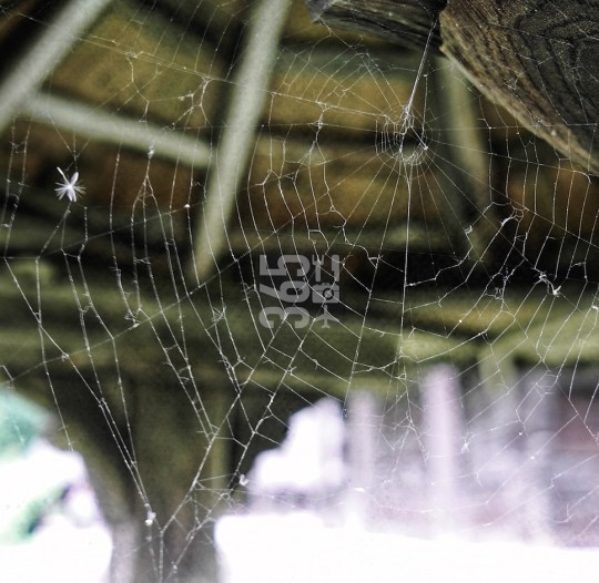 Spider web amongst wooden fountain