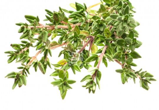 Savory | Satureja hortensis [59 Sh]