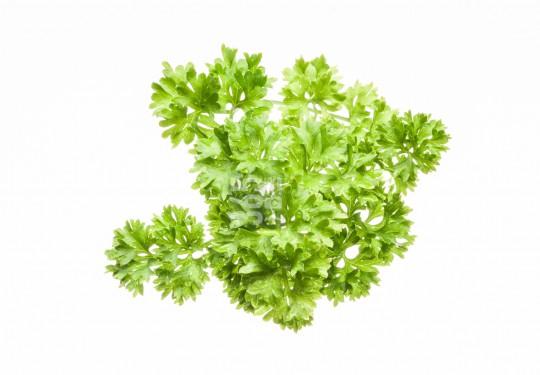 Parsley | Petroselinum crispum [57 Pe]