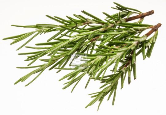 Rosemary | Rosmarinus officinalis [58 Ro]