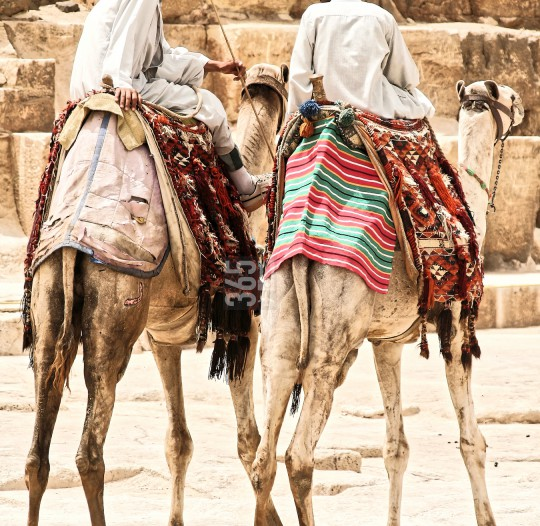 Two camel riders