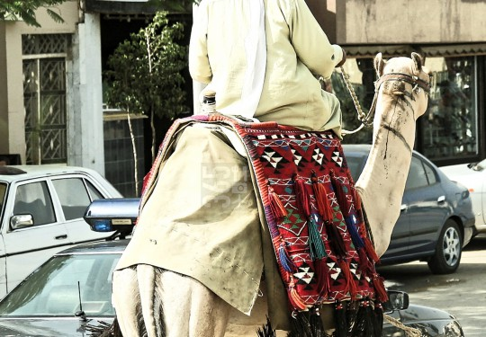Camel rider among street traffic