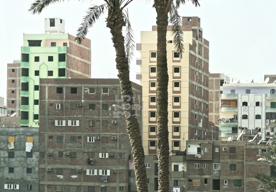 Palmtrees in front of residential blocks